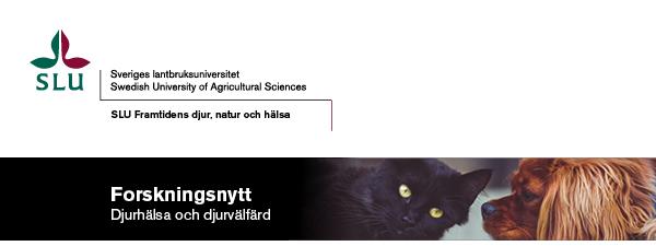 Framtidens djurhälsa och djurvälfärd