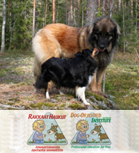 Rakkaat Haukut / Dog-Oriented Institute
