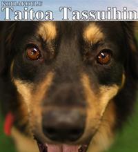 Koirakoulu Taitoa Tassuihin