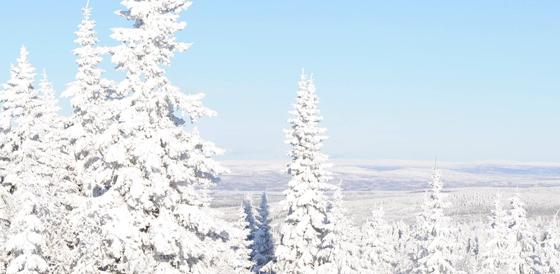 Vintergranar